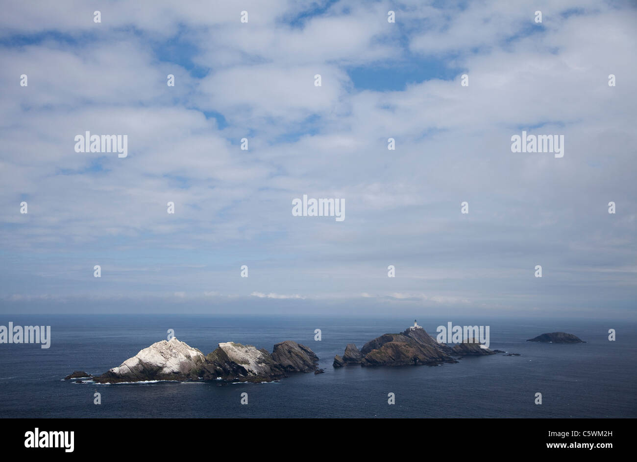Northern Gannet (Sula bassana, Morus bassanus). Breeding colony on Muckle Flugga, the UKs most northerly point - Stock Image