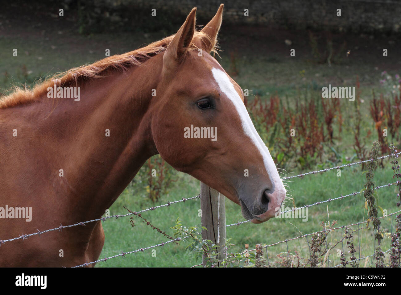 Barbed Wire Fence For Horses Center Amperes Power Supply Circuit Design Using Isl8036 Switching Horse Stock Photos Rh Alamy Com