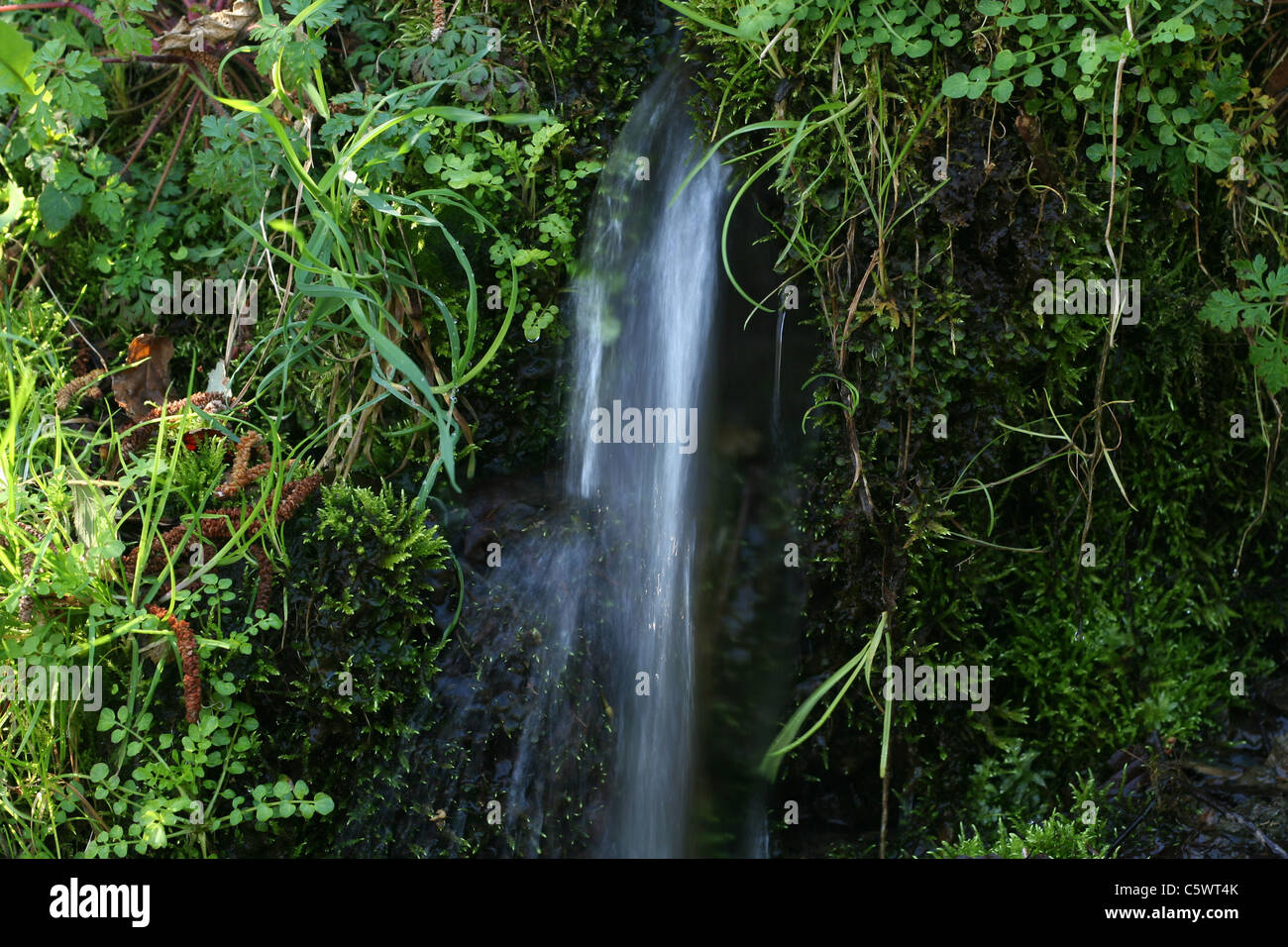A source appears in the rock covered by vegetation (Normandy-Maine park, Orne, Normandy, France). - Stock Image