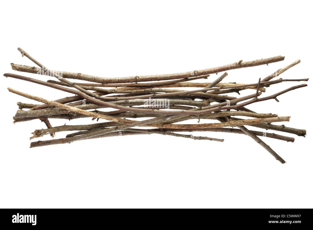 Sticks and twigs, wood bundle - Stock Image