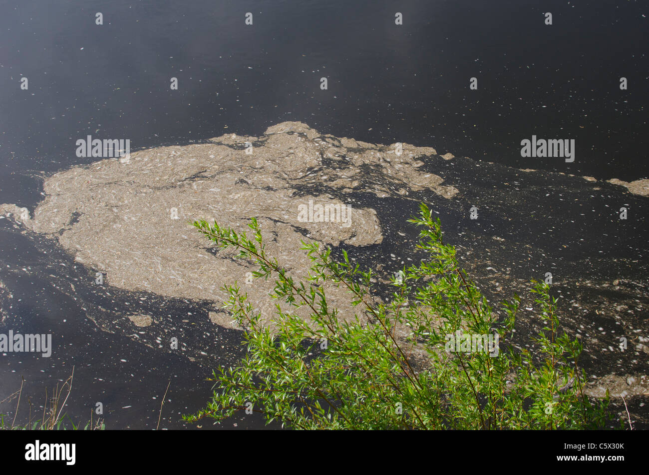 Scum and debris floating on the surface of a river - Stock Image