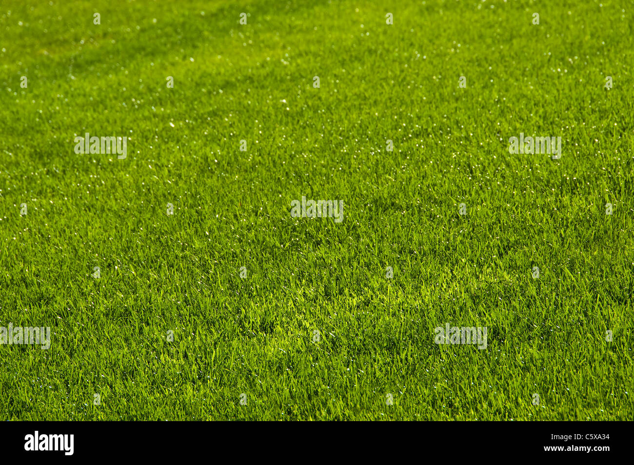 Lawn in spring - Stock Image
