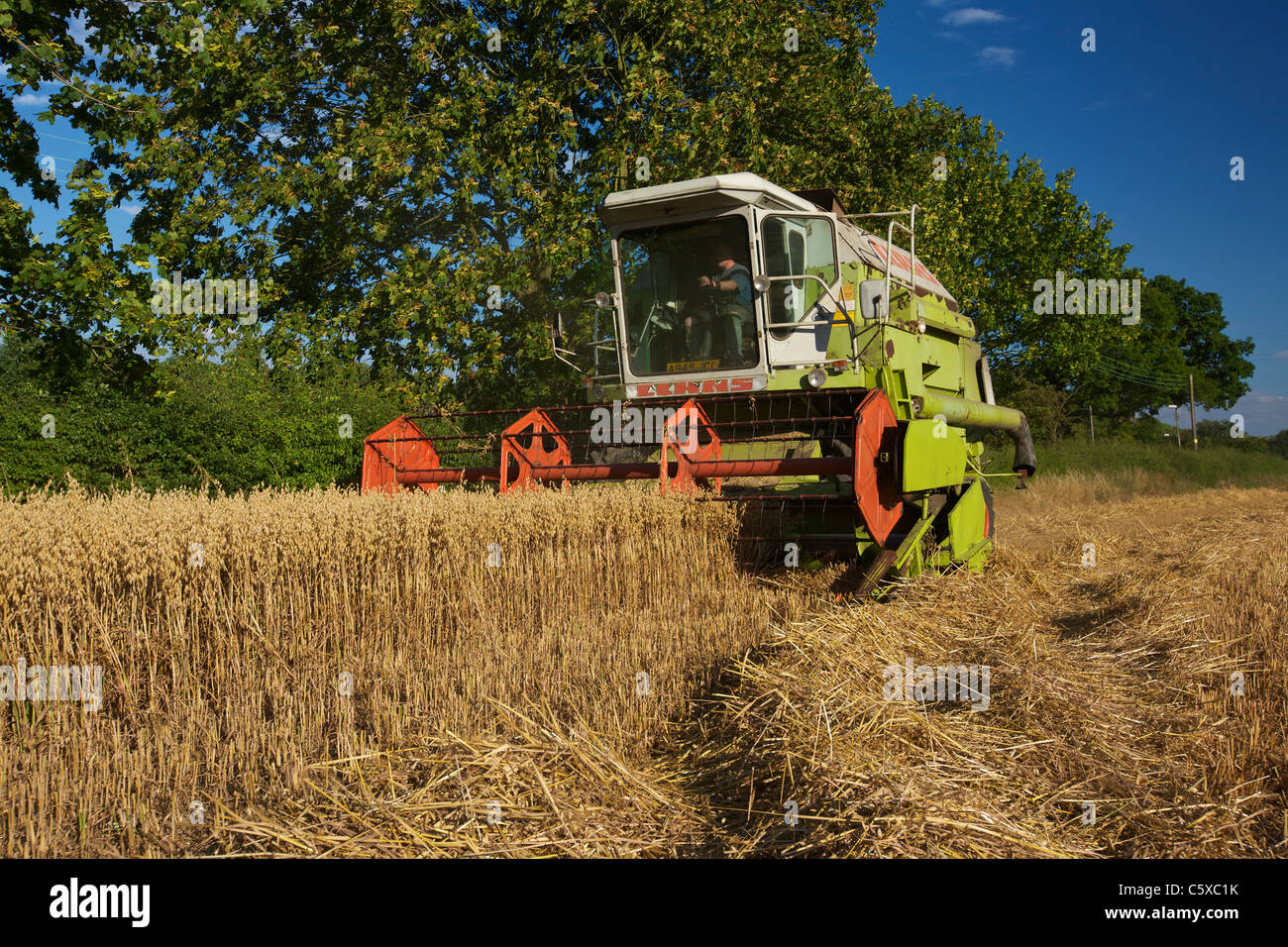 Claas Dominator 106 Cutting Oats - Stock Image