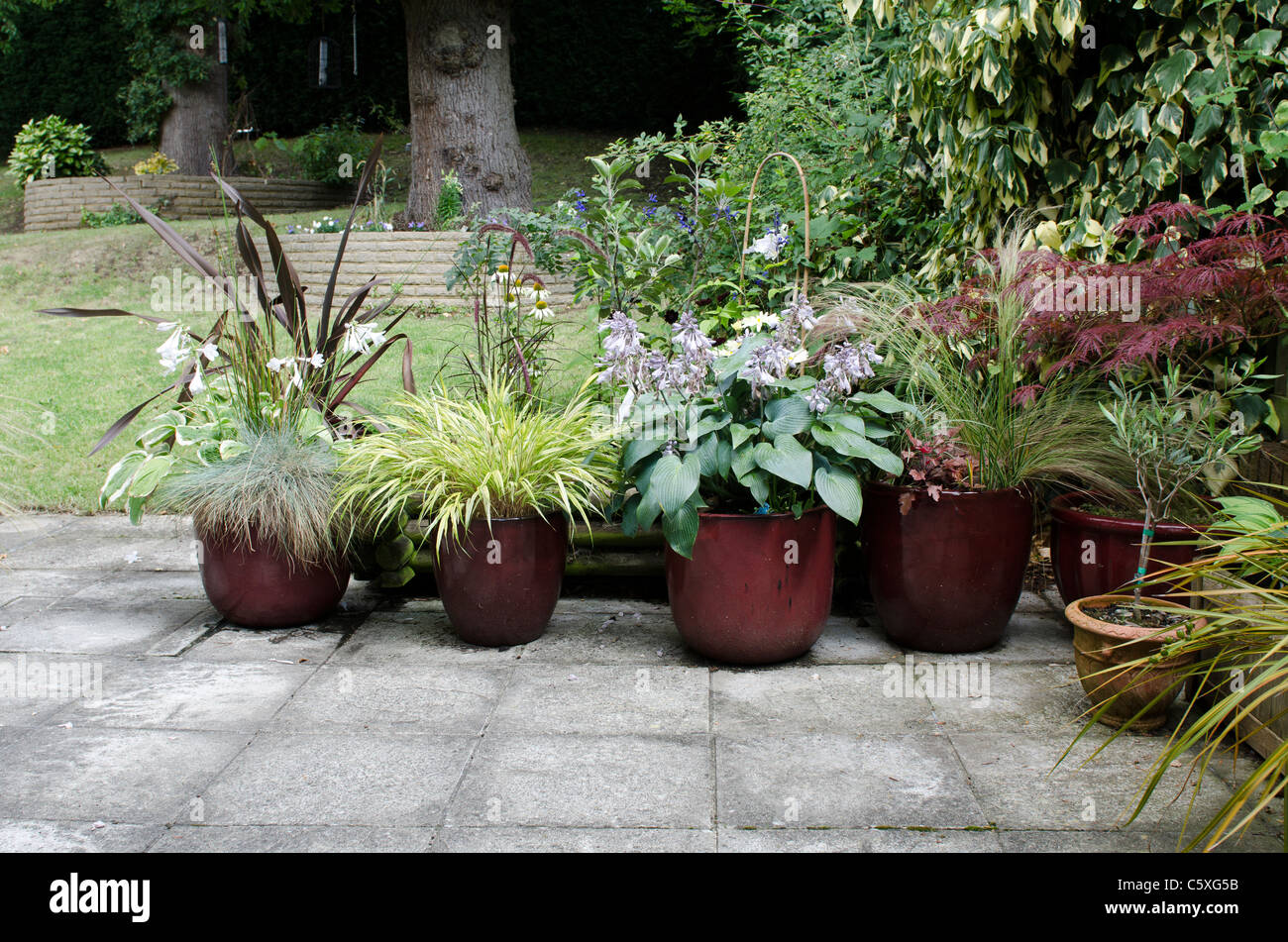 Patio garden pots from left ornamental grasses hosta red acer right patio garden pots from left ornamental grasses hosta red acer right olive front right workwithnaturefo