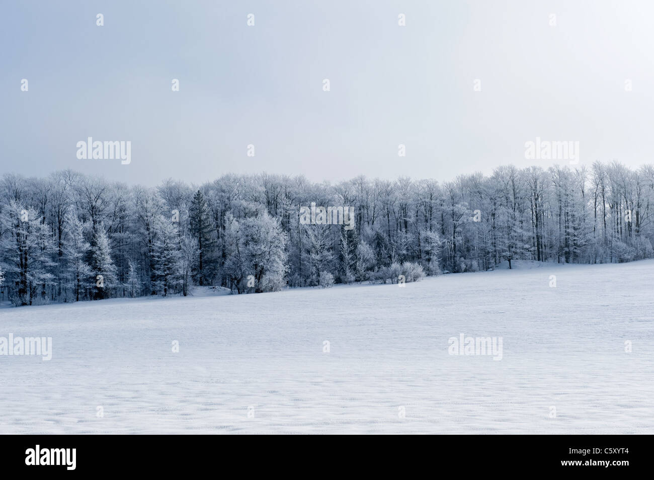 canadian winter landscape with snowy trees in the background - Stock Image