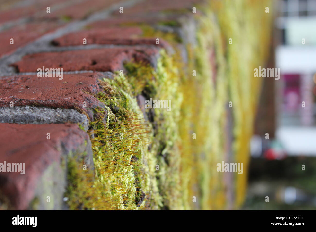 Old red brick wall with moss - Stock Image