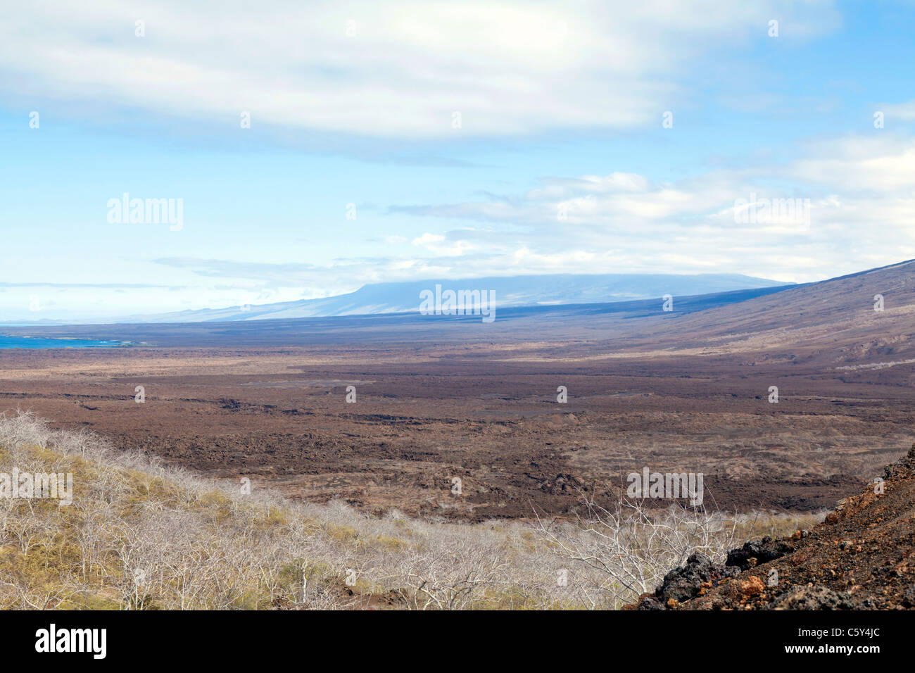 View over the lava field on Isabella Island, near Tagus Cove, Galapagos - Stock Image