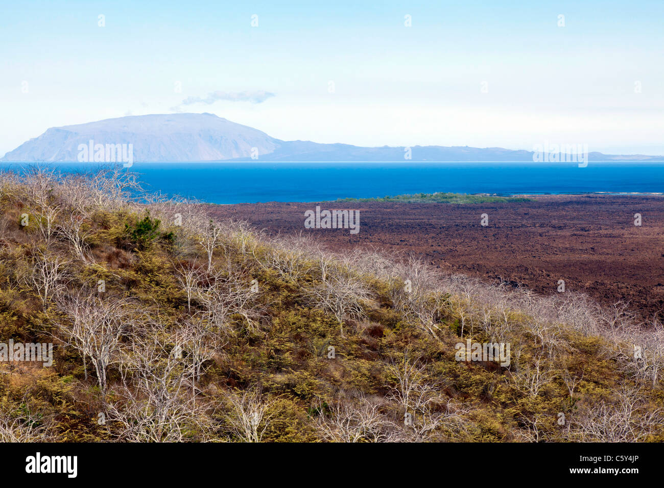 View over the lava field at Isabella Island, near Tagus Cove, Galapagos - Stock Image