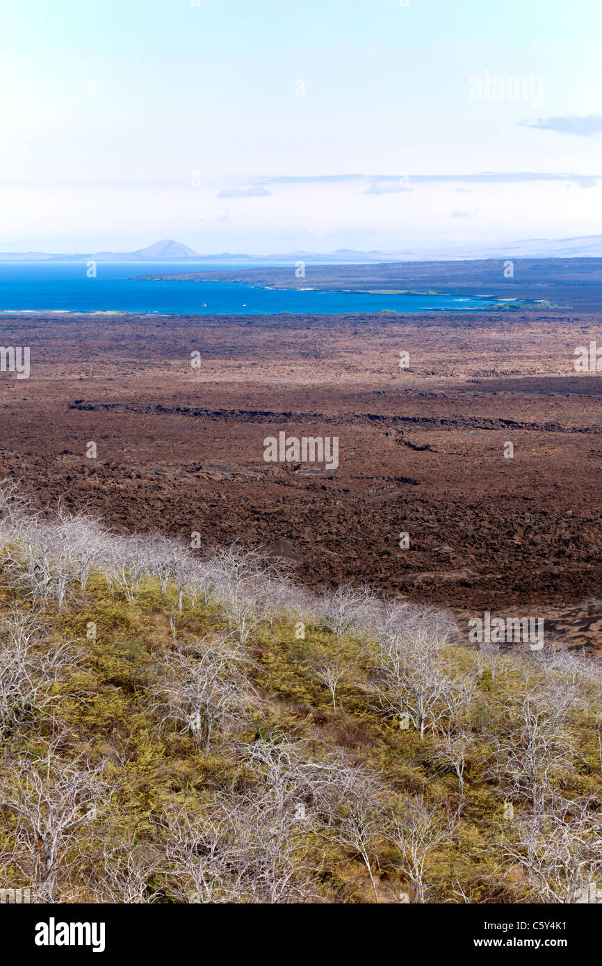 View over the lava field at Isabella Island, Galapagos - Stock Image