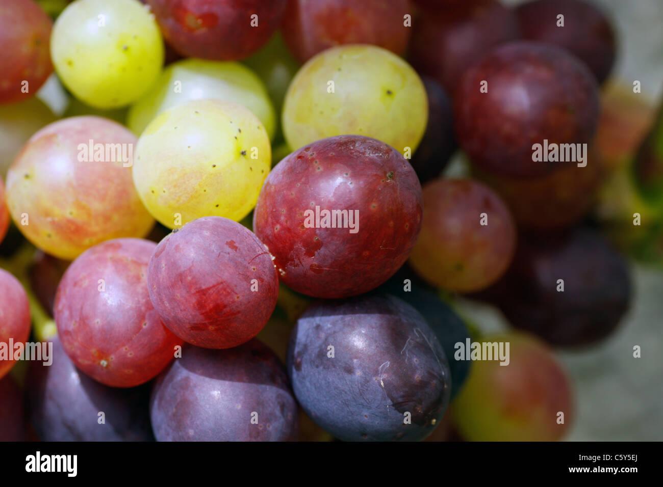 Wein, Weintraube, wine, grape Stock Photo