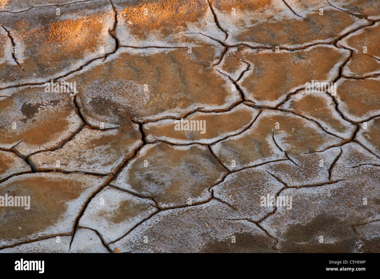 Salt deposit in a cracked soil, Northern Sudan,  Africa - Stock Image