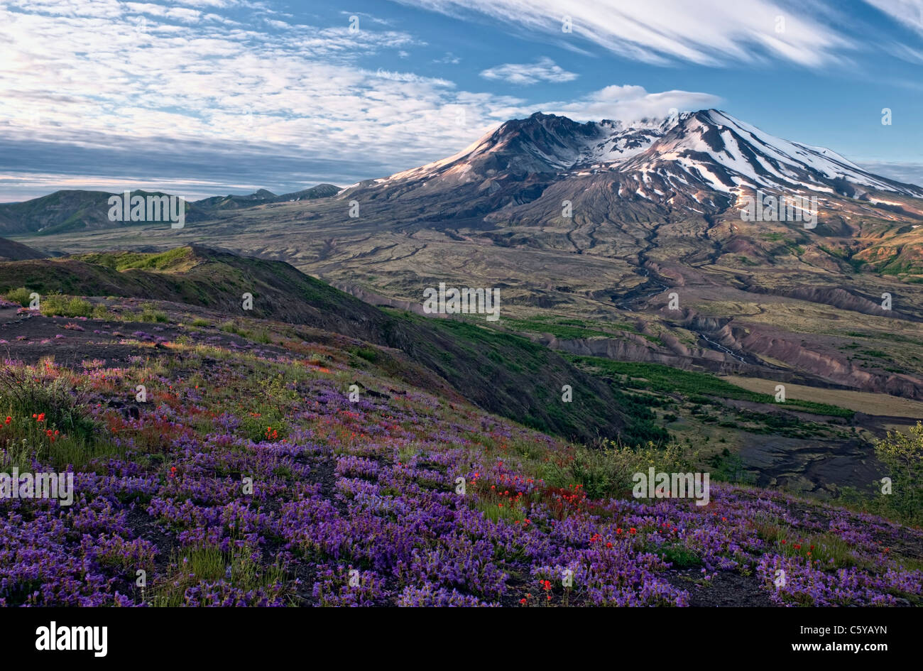 First light streams across the wildflowers along Johnston Ridge overlooking Washington's Mount St Helens NatVolcanic - Stock Image