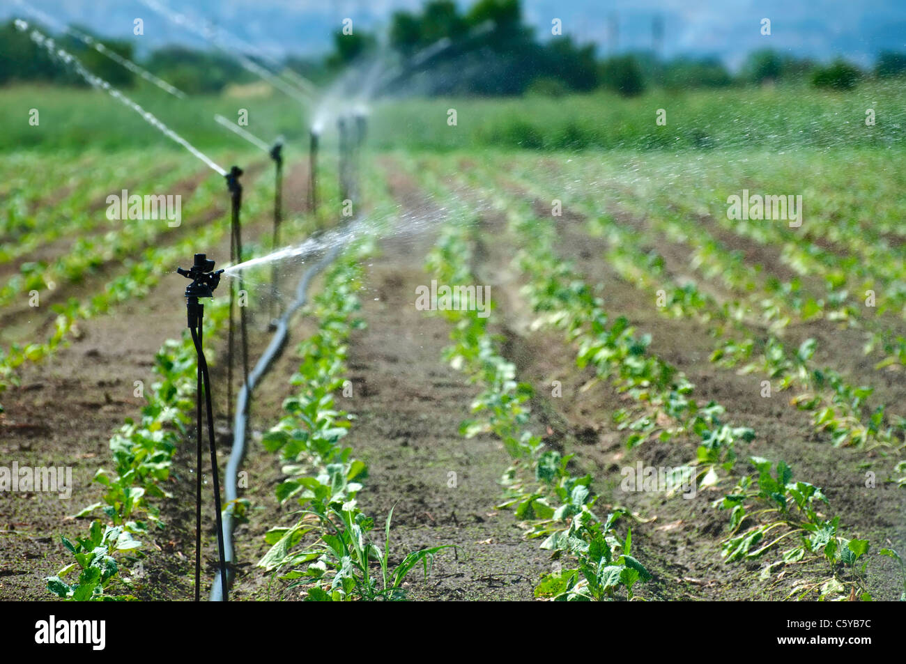 Irrigation on Agricultural land - Stock Image