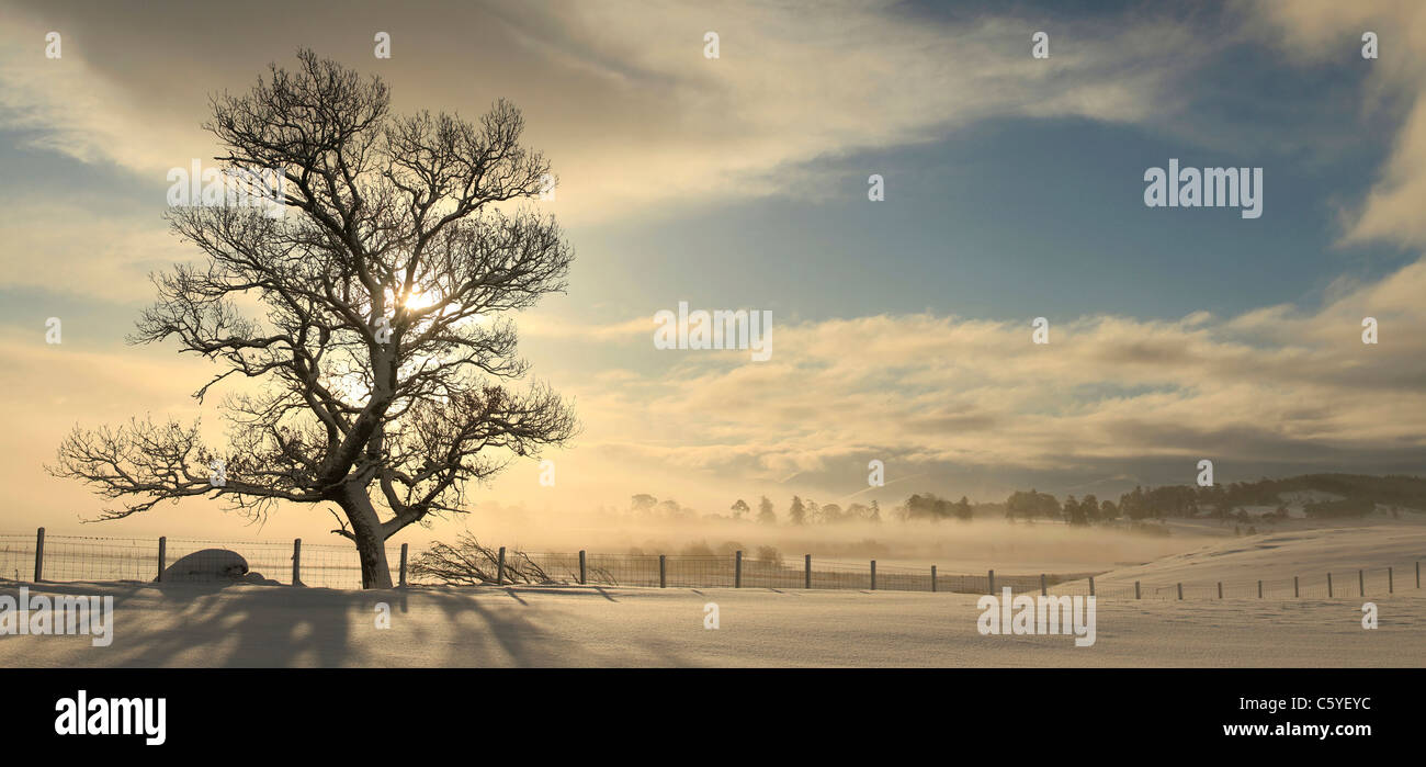 Tree silhouetted on winters sunrise, Strathspey, Cairngorms National Park, Scotland, Great Britain. - Stock Image