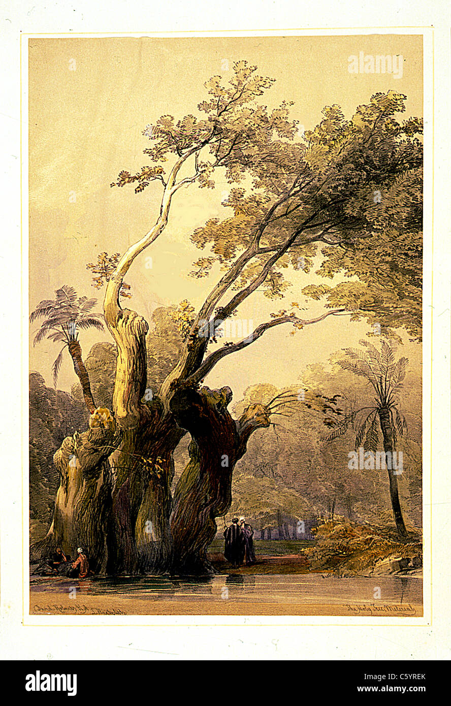 The holy tree, Metereah - David Roberts and Louis Haghe Lithograph - Stock Image