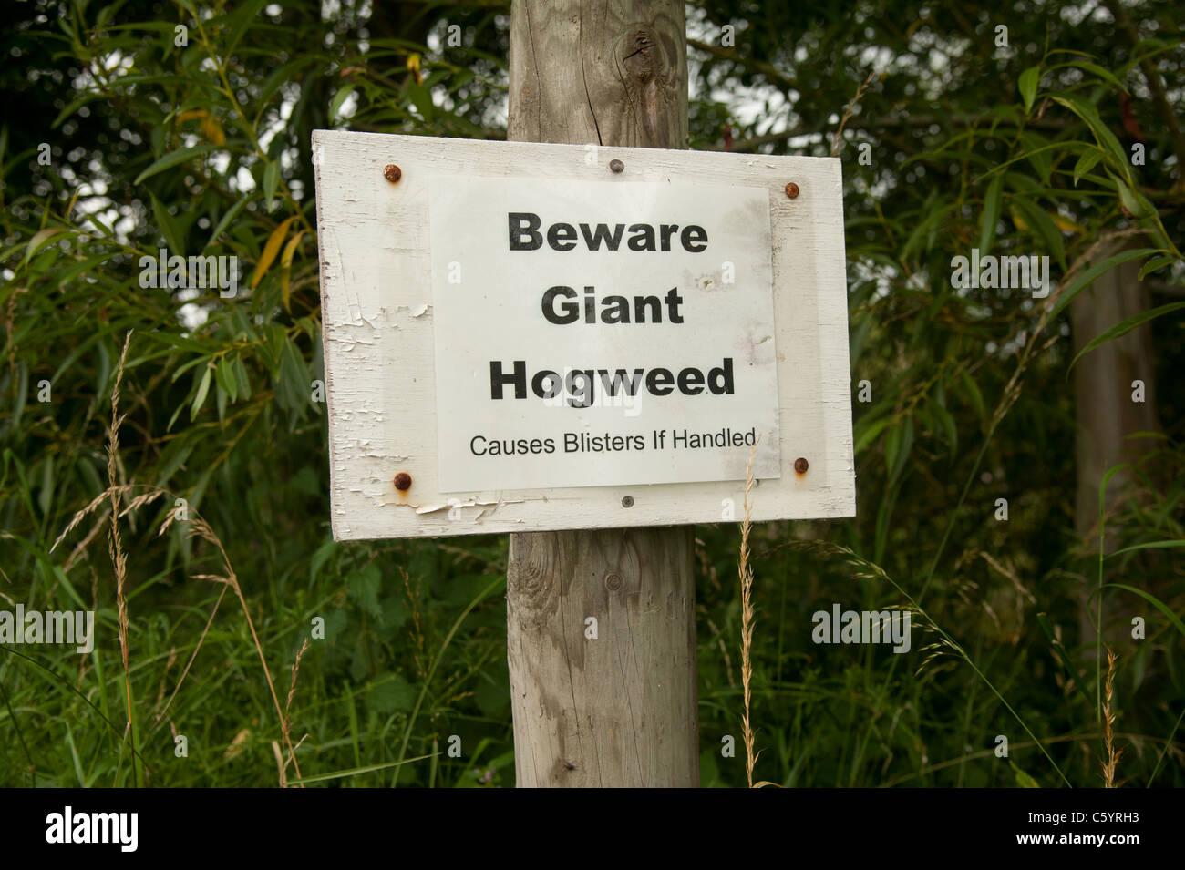 'Beware Giant Hogweed' warning sign, wales uk - Stock Image