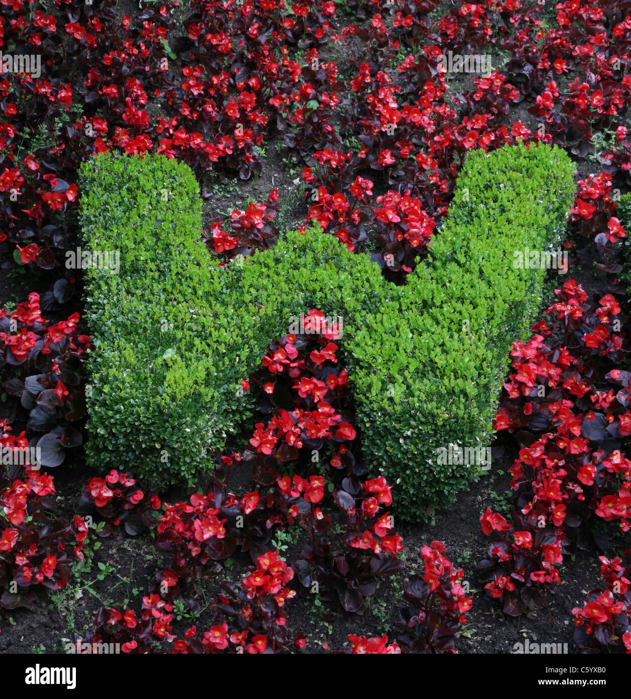 The letter W in a floral display - Stock Image