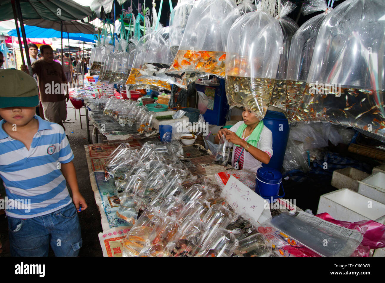 living fish in plastic bags at Chatuchak market stall in Bangkok, Thailand - Stock Image