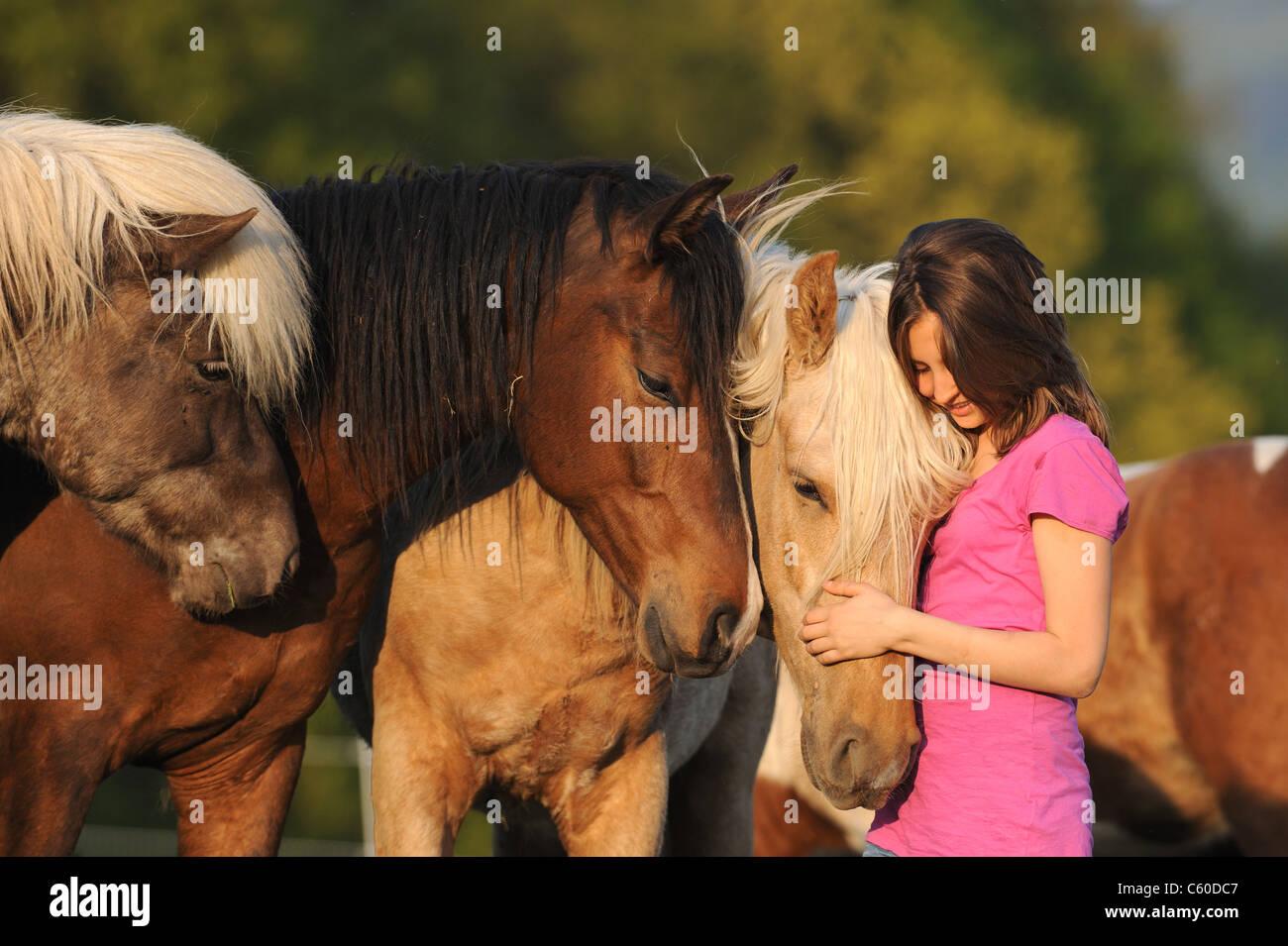Mangalarga Marchador (Equus ferus caballus). Girl with Mangalarga Machadors and Icelandic Horses on a meadow. - Stock Image