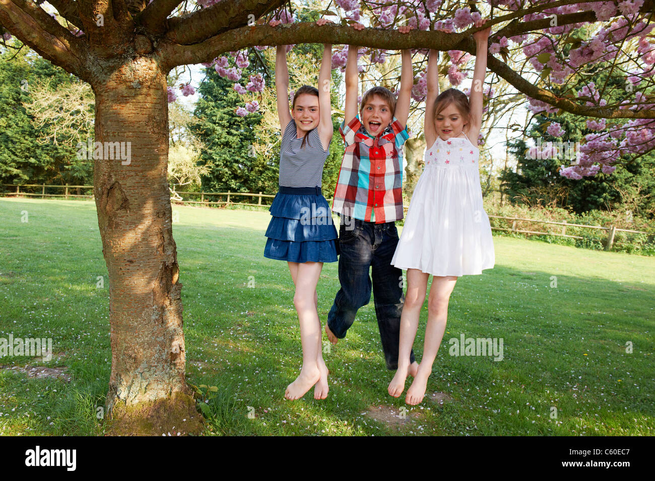 Children swinging from tree in backyard - Stock Image