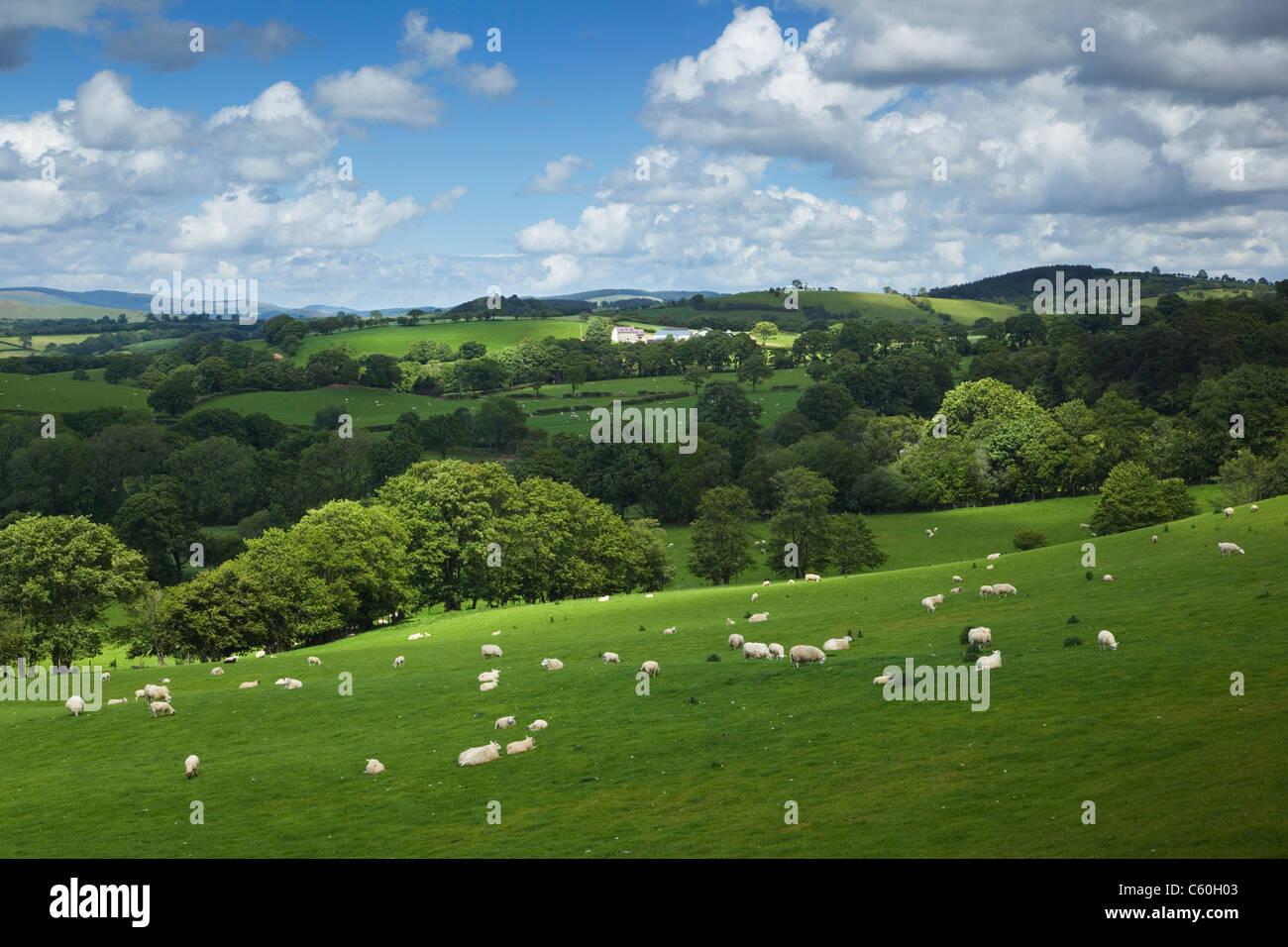 Farmland near Myddfai Village. Brecon Beacons National Park. Carmarthenshire. Wales. UK. - Stock Image
