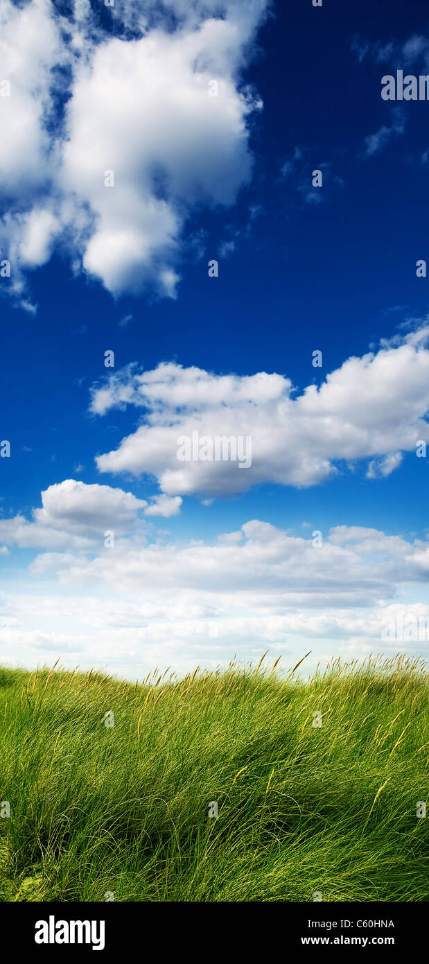 Grass meadow - Stock Image