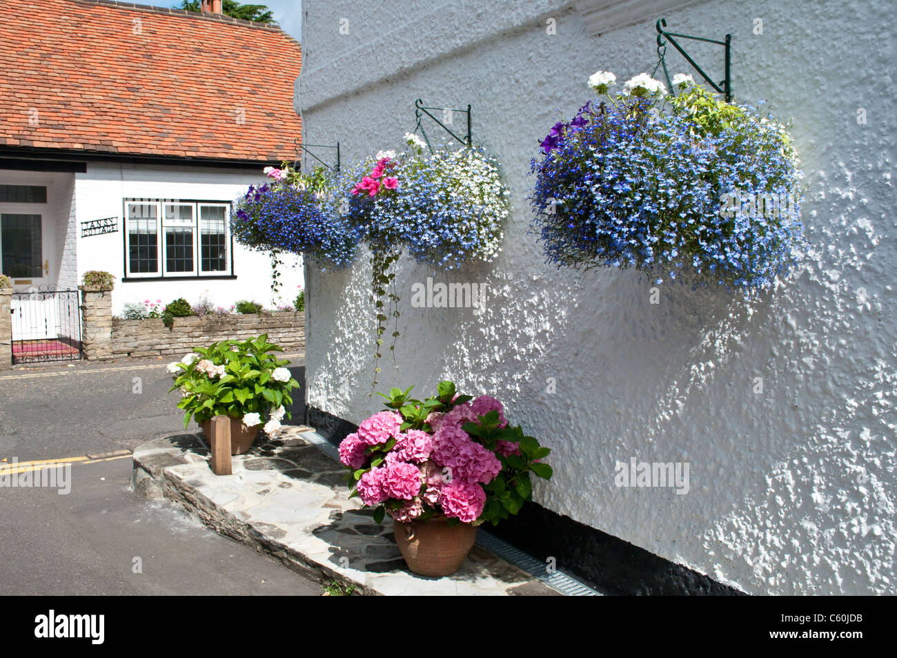 Trailing Lobelia Stock Photos Trailing Lobelia Stock Images Alamy