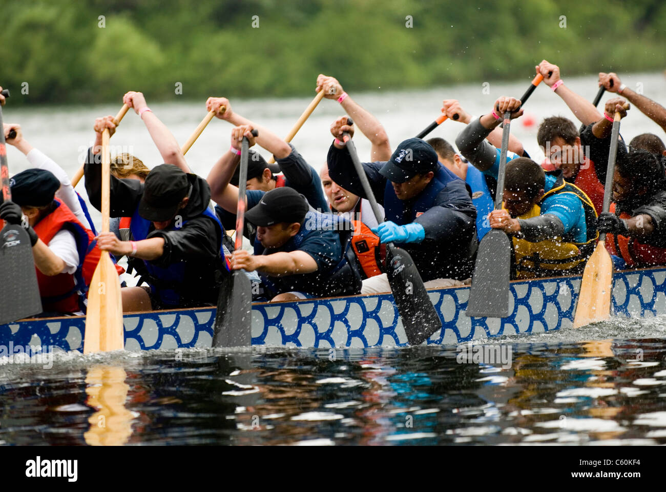 University of Toronto's Missassagua Campus Smokin Tuna Dragon Boat racing at the 21st TELUS Toronto International - Stock Image
