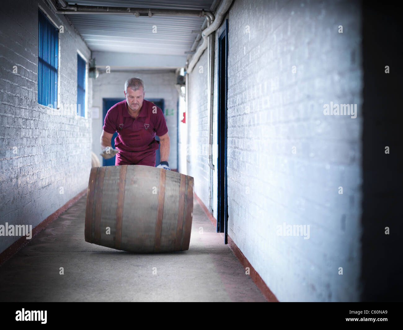 Worker rolling whisky barrel - Stock Image