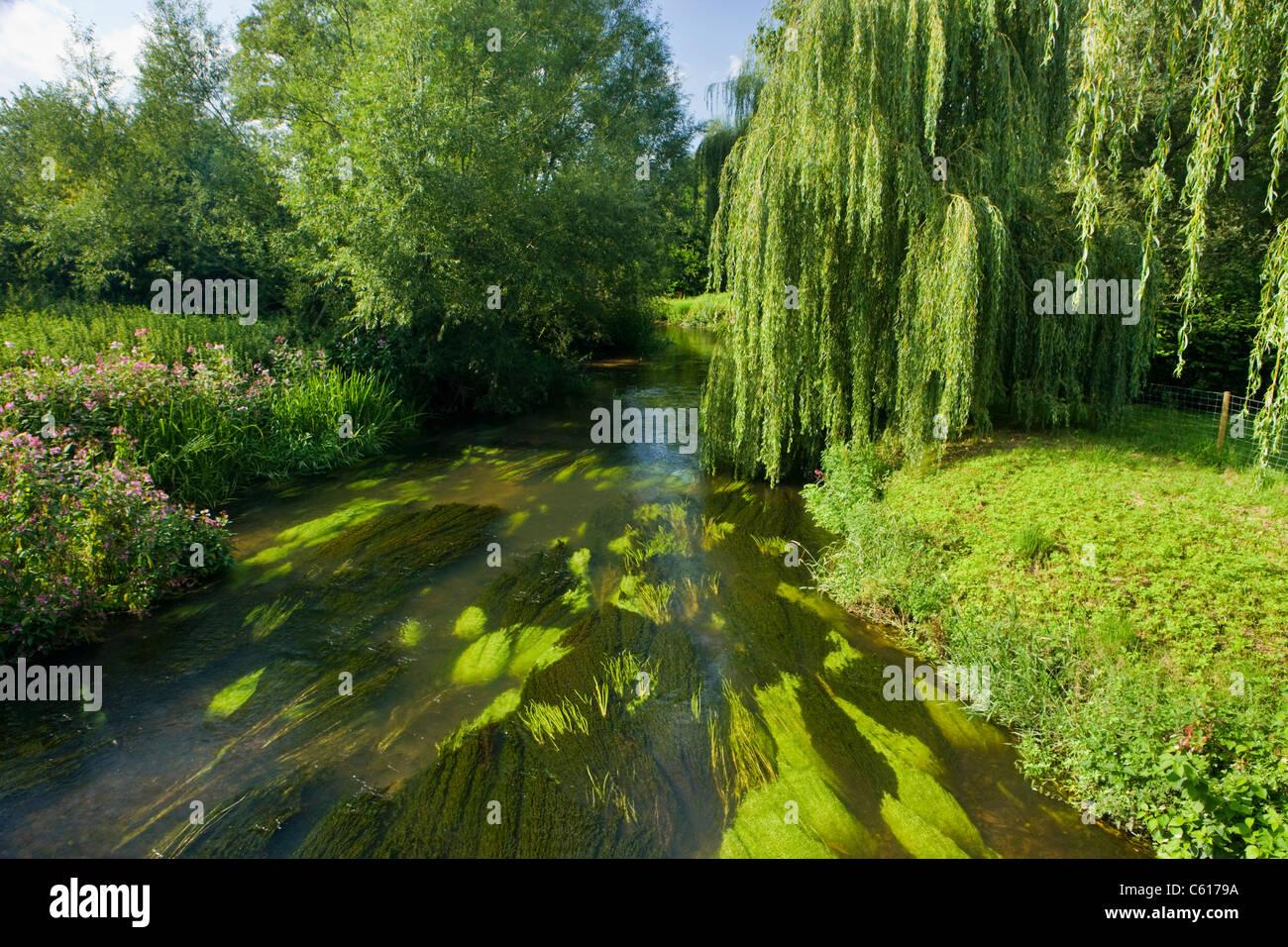 River Wey at Elstead, Surrey, UK. - Stock Image