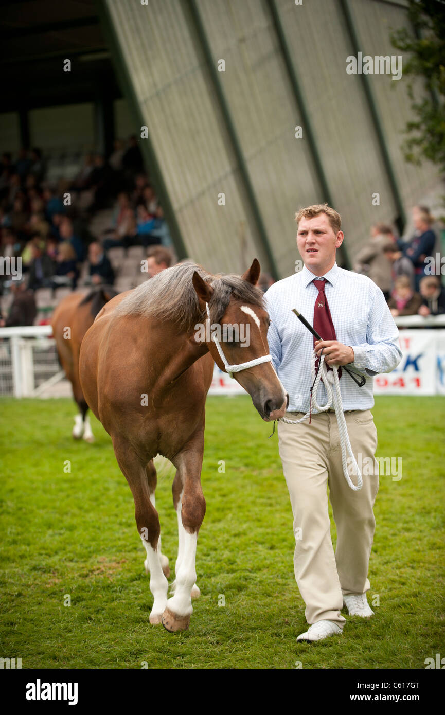 Horses on show at the Royal Welsh Agricultural Show, Builth Wells, Wales, 2011 - Stock Image