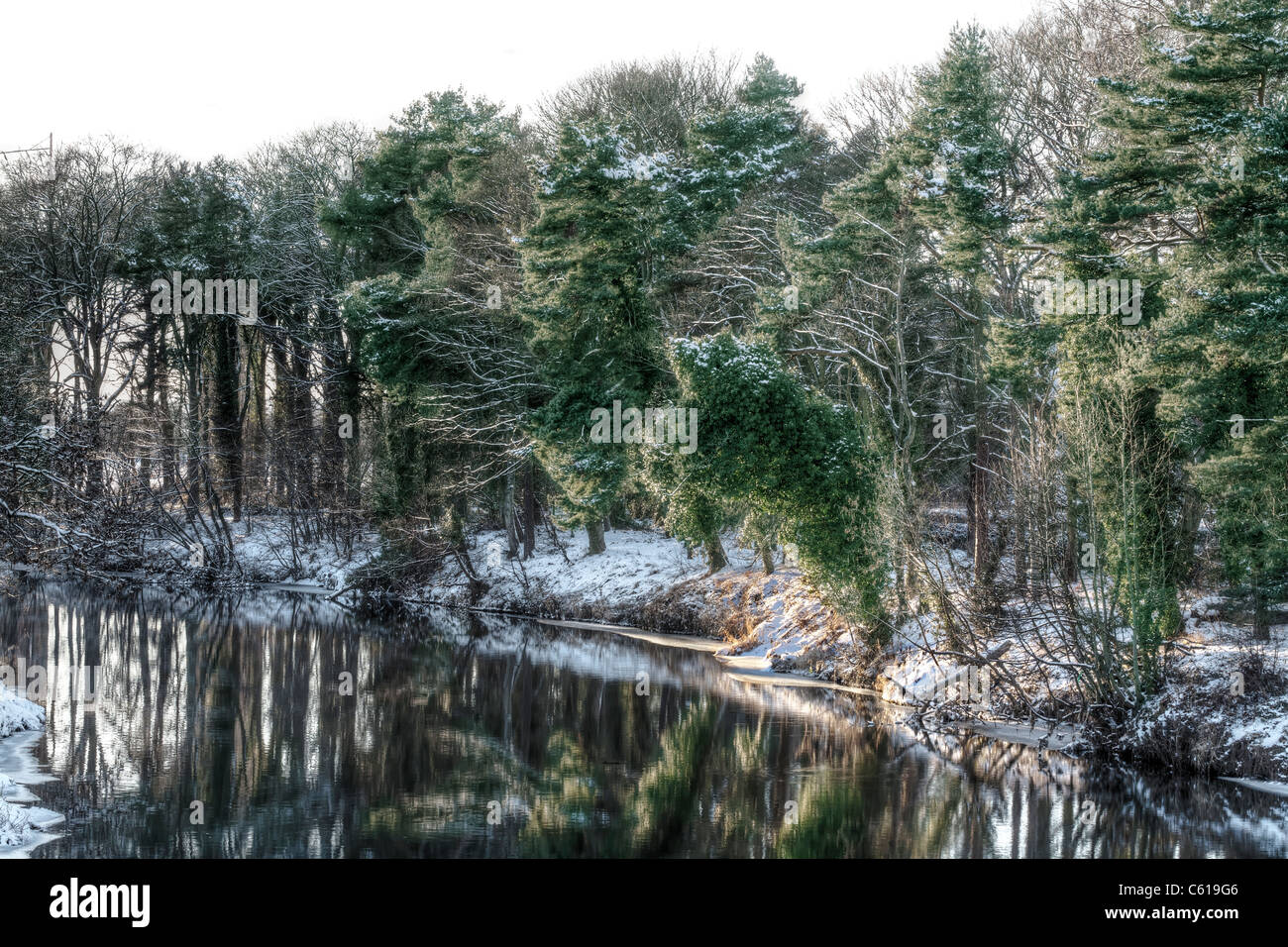 Snow covered evergreen trees along a riverbank. - Stock Image