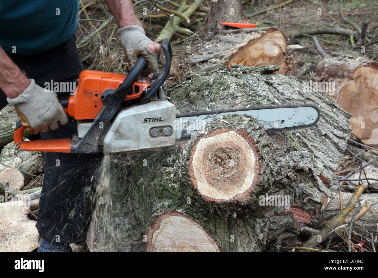 Male hands using a chainsaw cutting to a newly fallen tree Stock Photo
