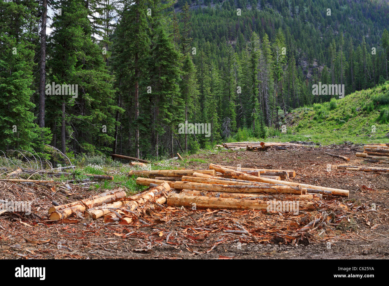 Freshly cut lumber on a hillside in British Columbia - Stock Image