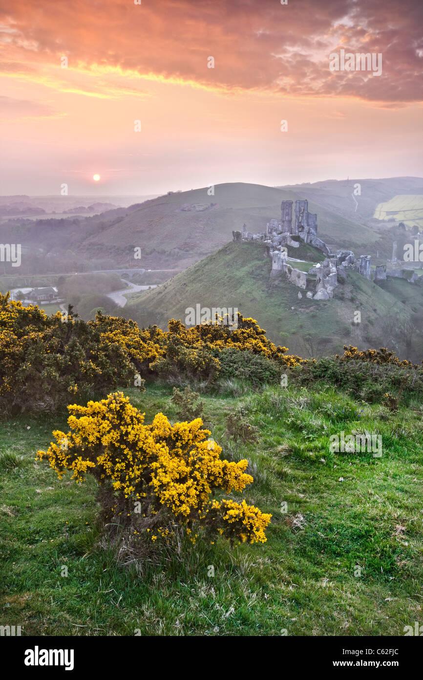 Sunrise at Corfe Castle in Dorset, England. - Stock Image