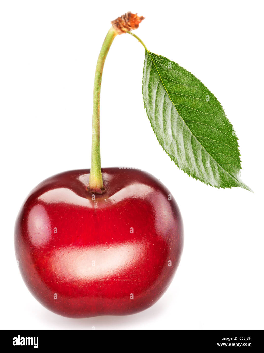 One perfect sweet cherry with the leaf isolated on a white background. - Stock Image