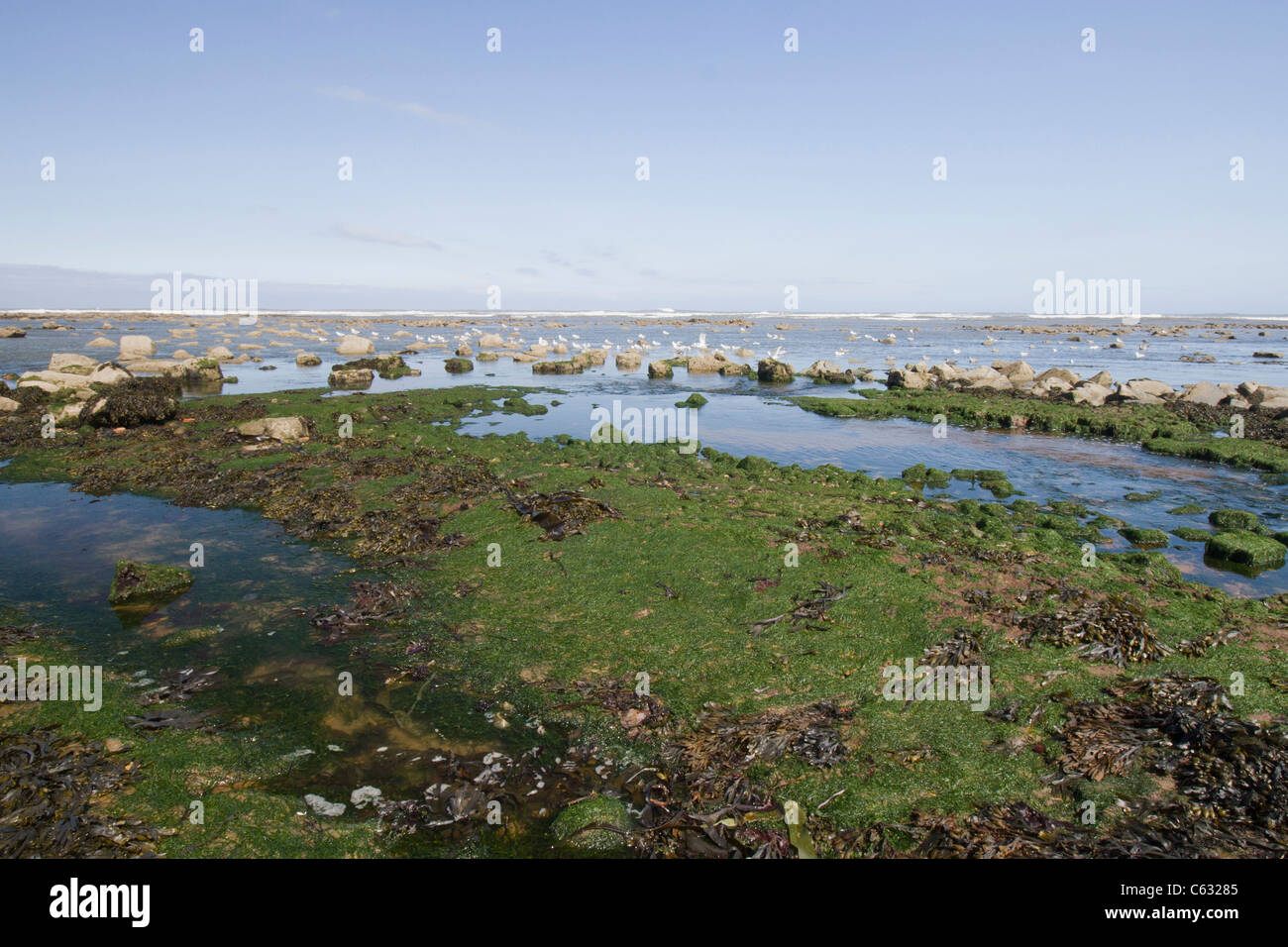 Scarborough north bay and Coastline in Yorkshire England - Stock Image