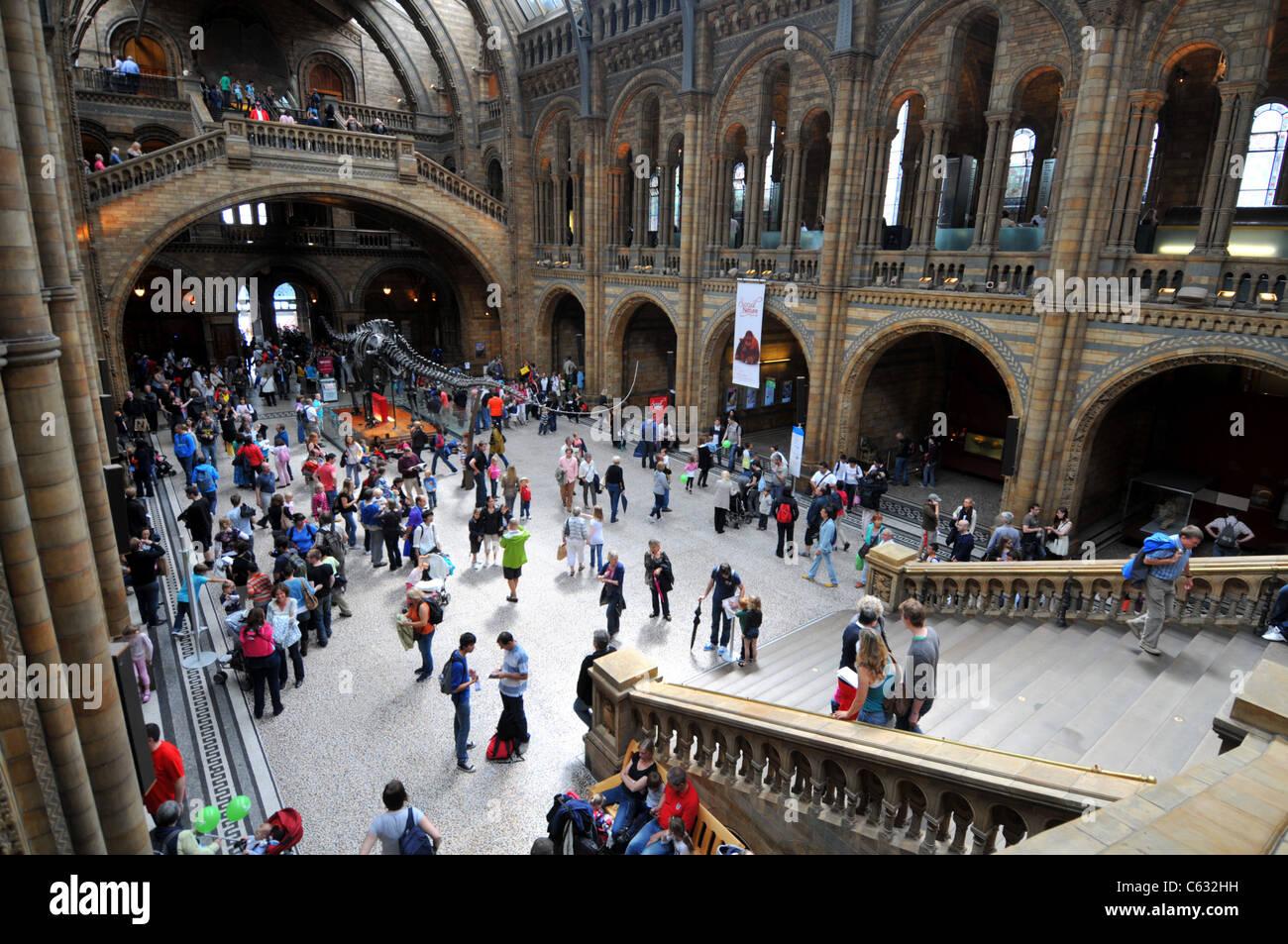 Natural History Museum, London, Britain, UK - Stock Image