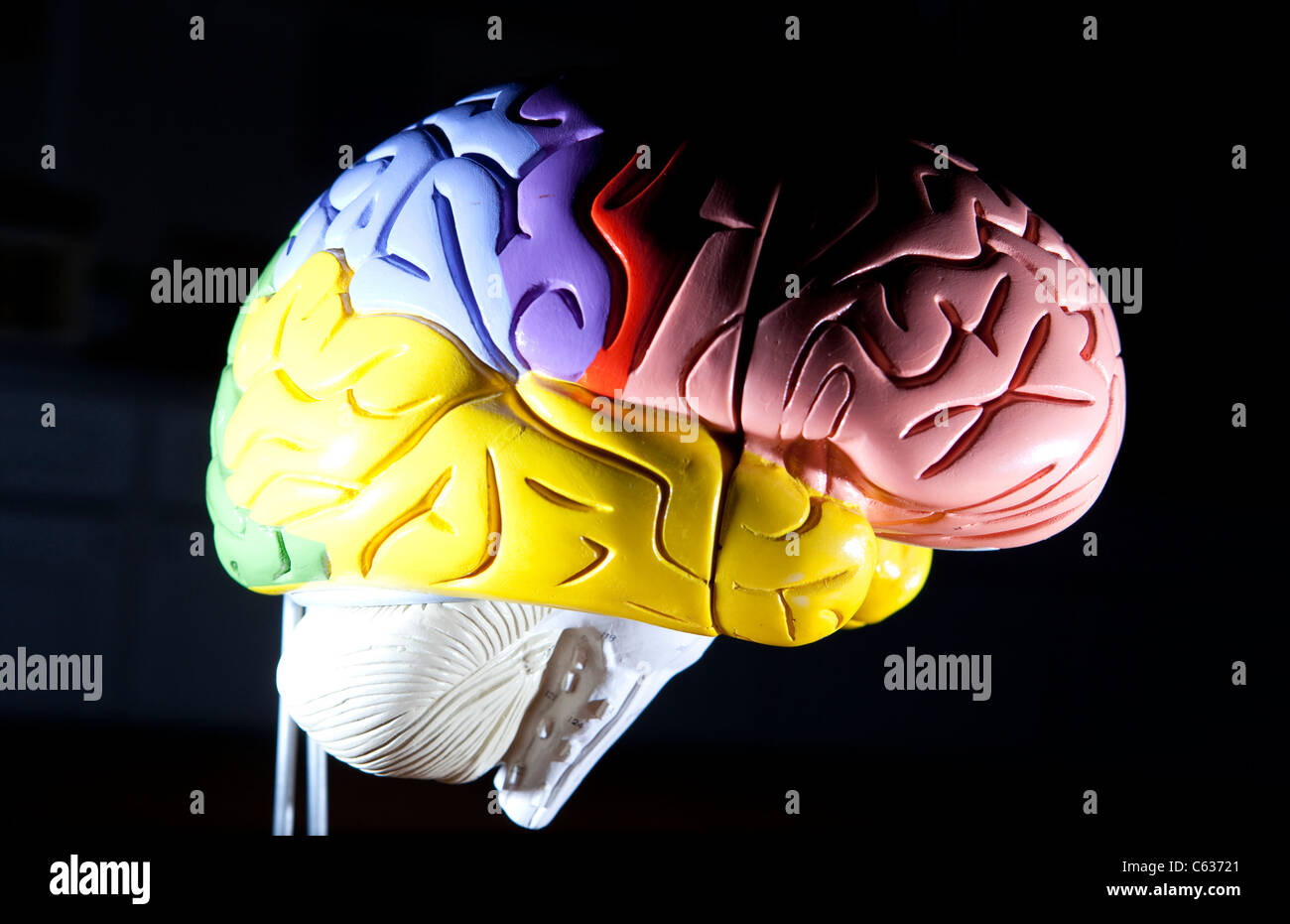 A Plastic Model Of The Human Brain A Teaching Aid For Medical