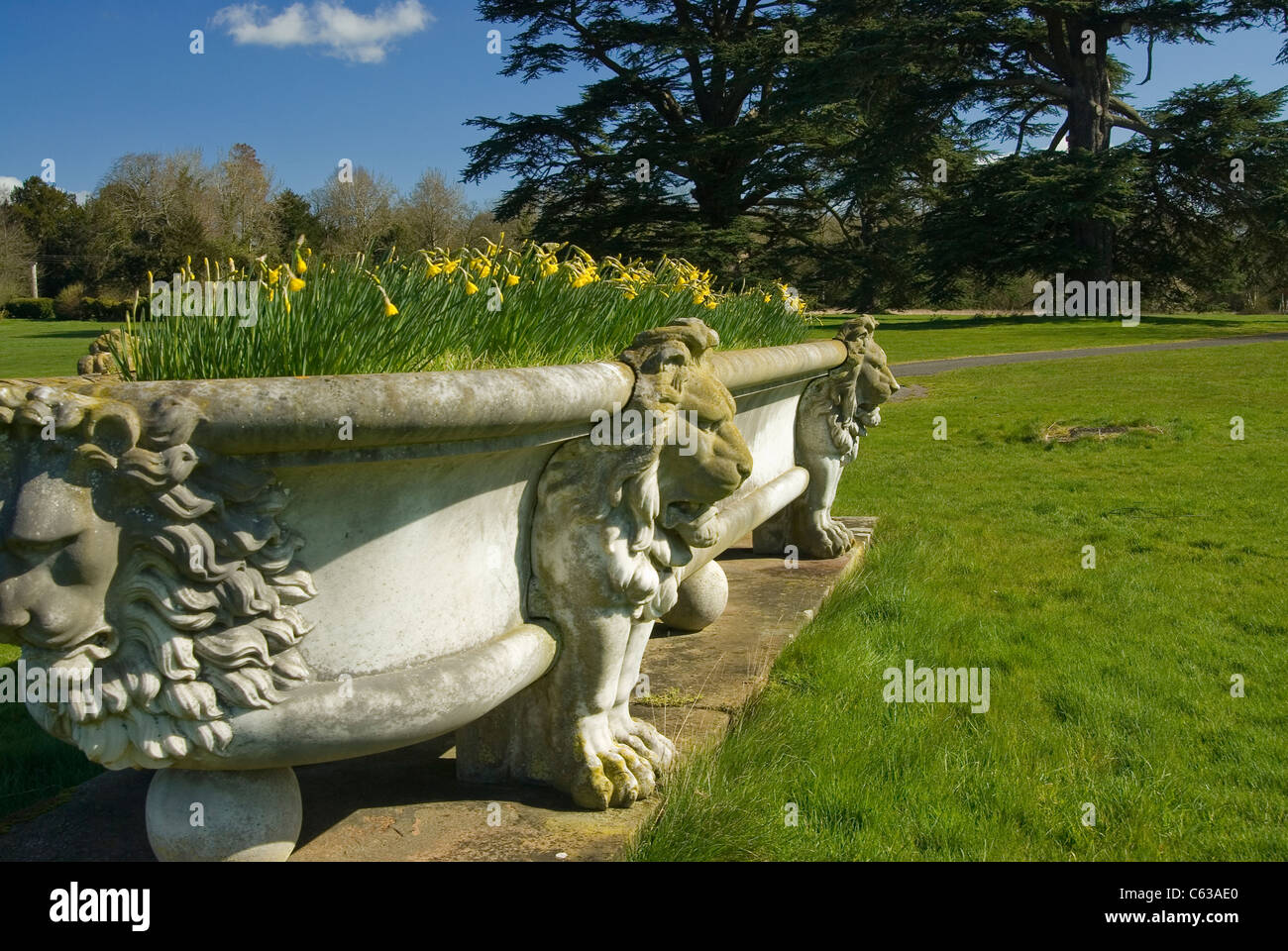 Large ornamental garden trough filled with daffodils at old renaissance period house in berkshire, england near Stock Photo