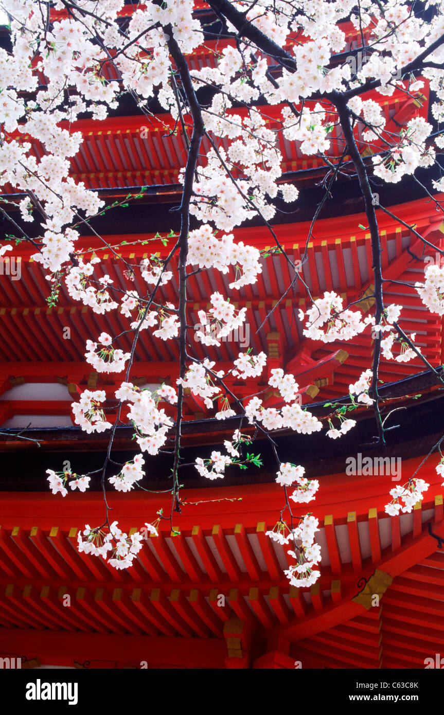 Red five roof tower shrine on Isla de Itsuku at Miyajima in Japan contrasting white cherry blossoms - Stock Image