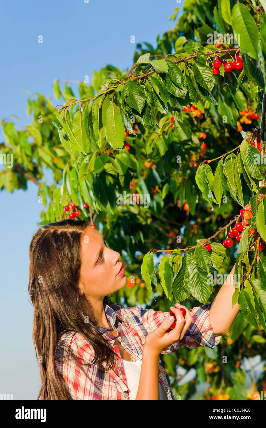 Cherry tree beautiful woman picking cherries branch summer sunny day - Stock Image