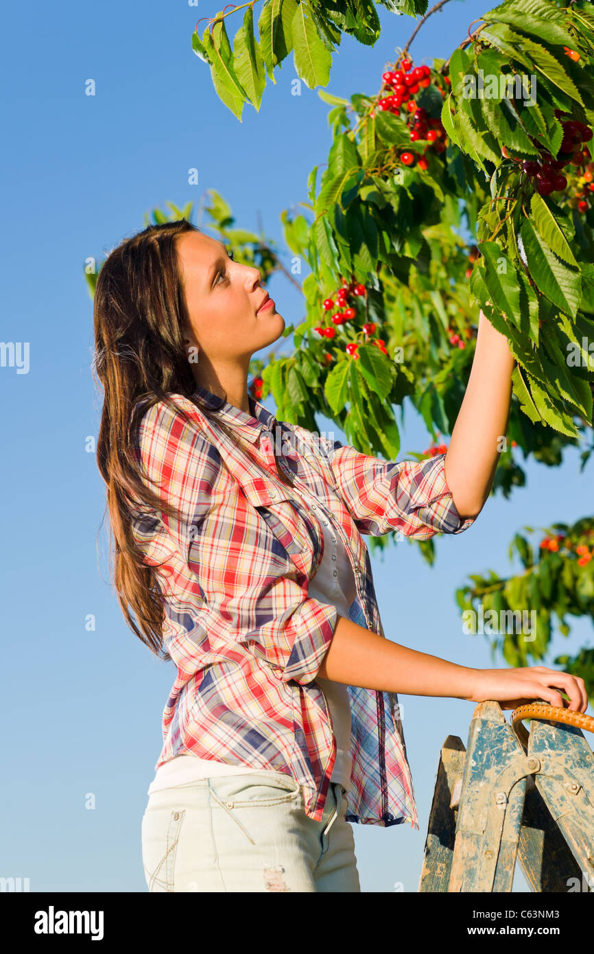 Cherry tree beautiful woman picking branch summer sunny day - Stock Image