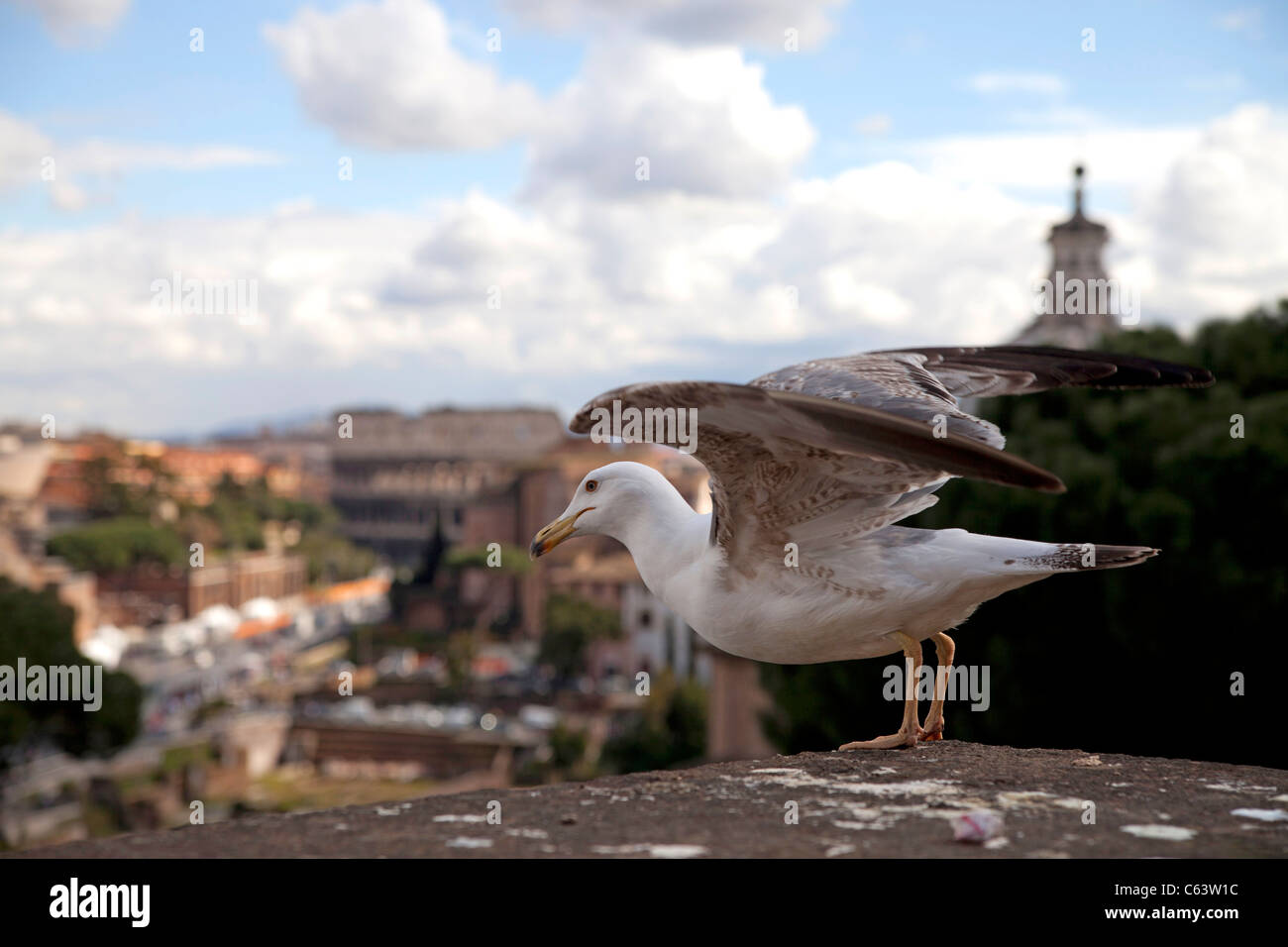 seagull departing towards the ancient Colosseum in Rome, Italy, Europe Stock Photo