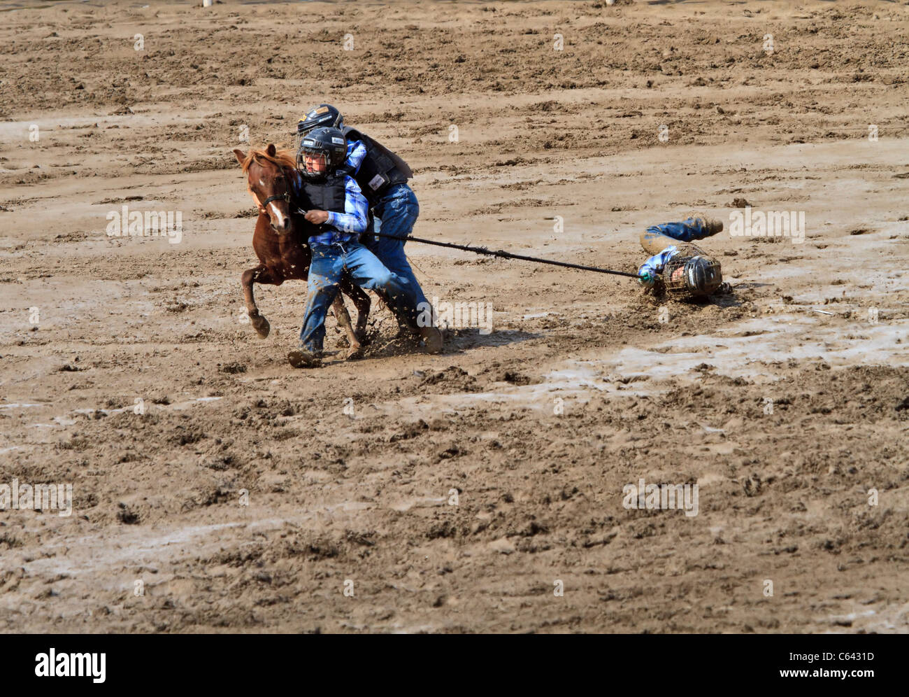 Wild Pony Race Calgary Stampede Alberta Canada This Is