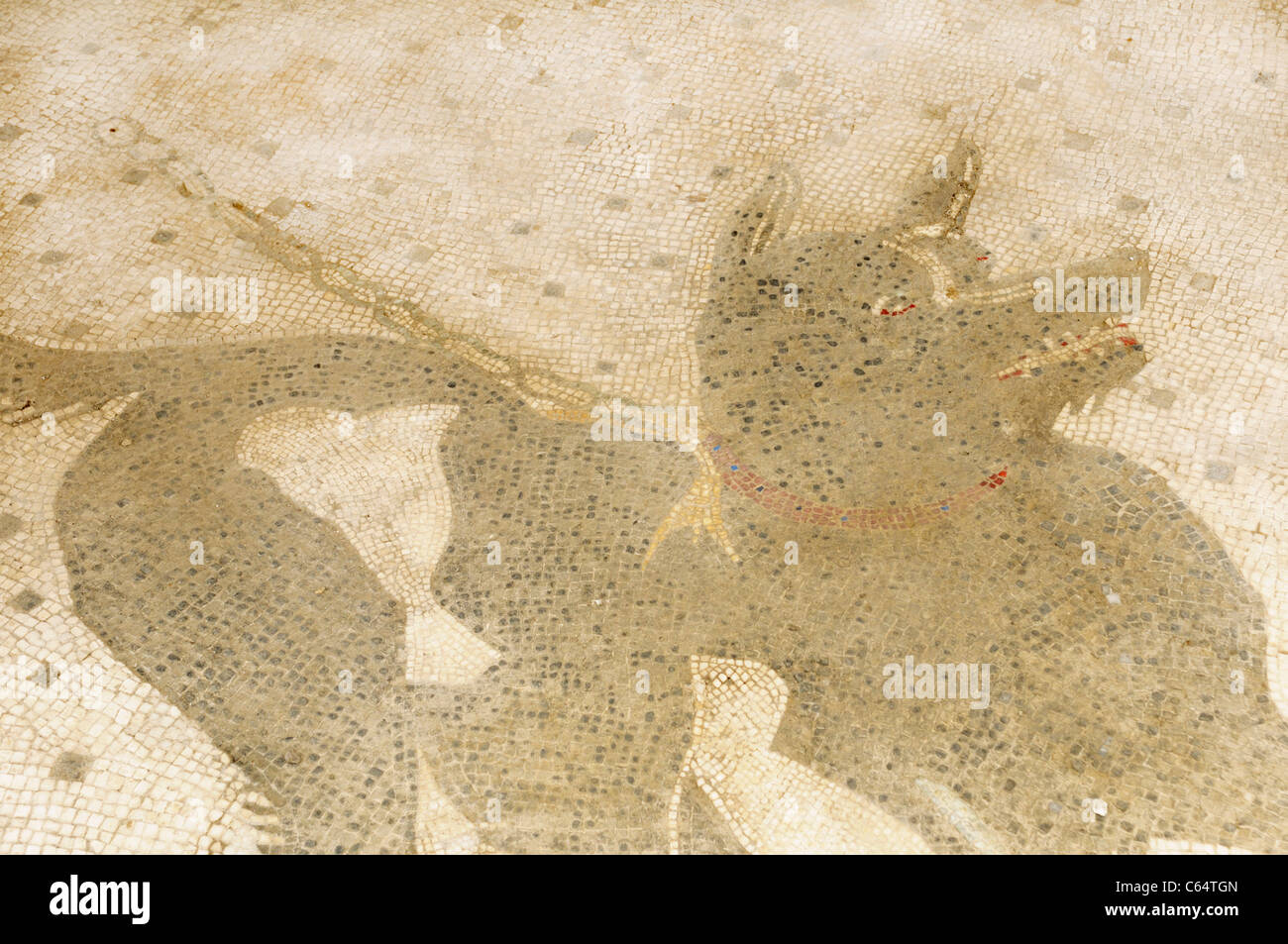 Beware of dog floor mosaic at the entrance to the House of the Tragic Poet, Pompeii - Stock Image