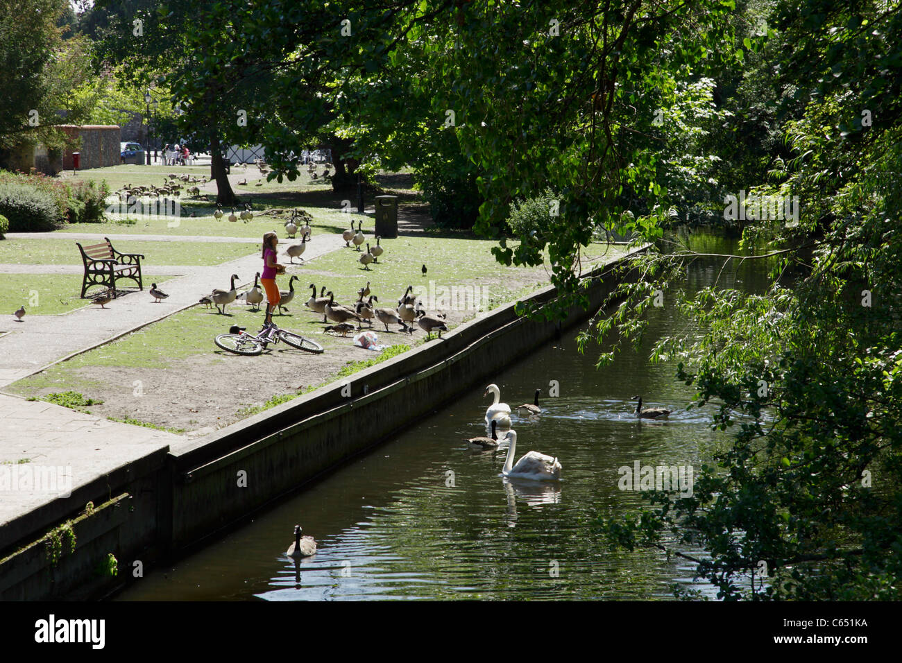 Young girl feeding wildfowl beside River Thet at Thetford Norfolk Stock Photo