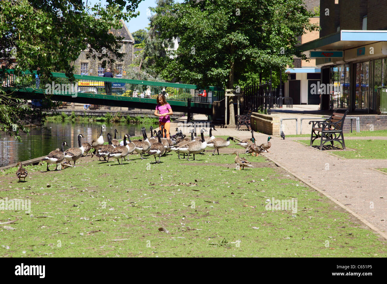 Young girl feeding wildfowl beside River Thet at Thetford Norfolk - Stock Image