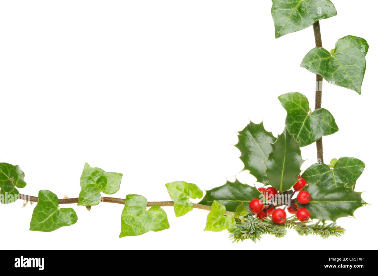 Christmas themed border of holly and ivy with white copy space - Stock Image