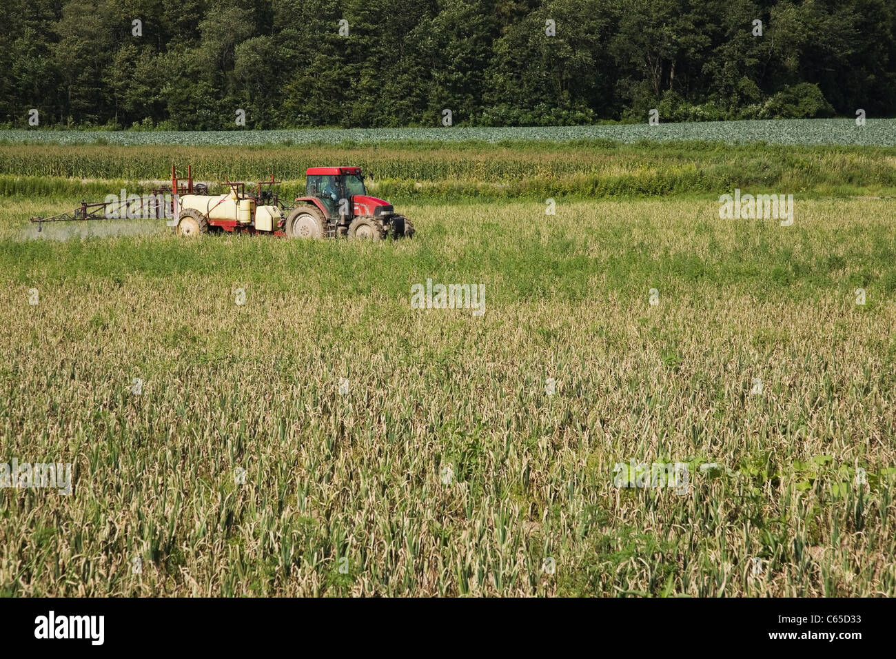 Tractor spraying field - Stock Image